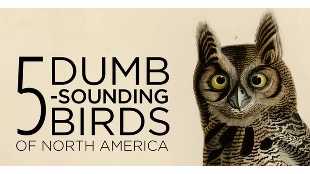 5 Dumb sounding birds of north america