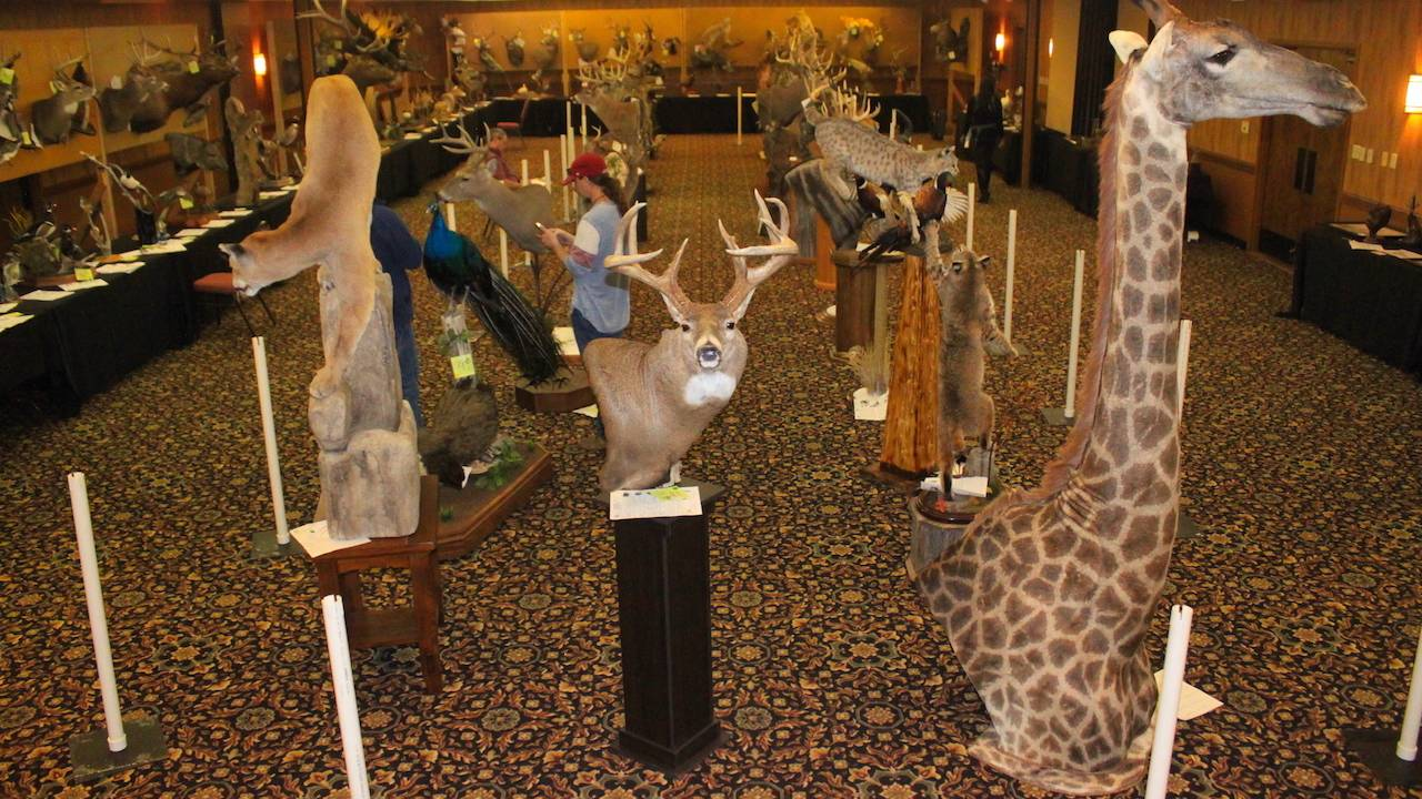 SD Taxidermy Association Convention