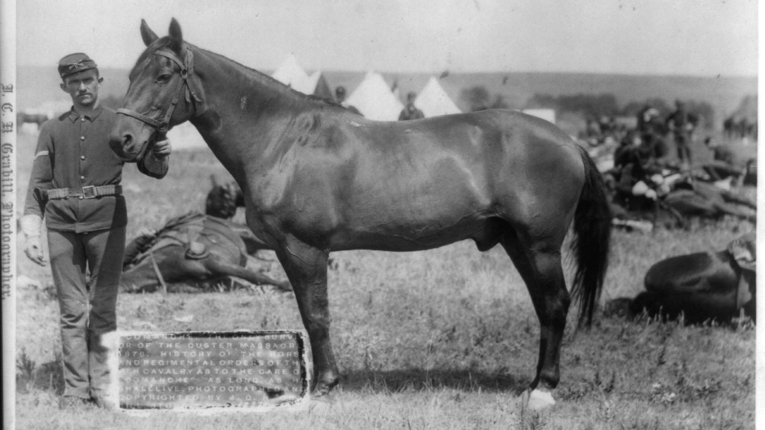 The horse that was the only survivor from Custer's last stand