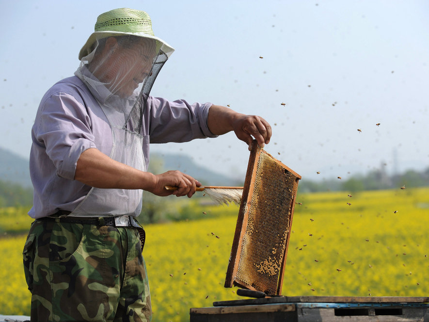 Image - chinese-beekeeper-860f0f94f0cf16c6c37e1ff74c63bfb02f80b773-s900-c85.jpg