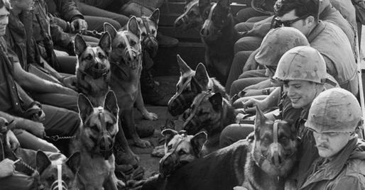 Image - storymaker-dogs-military-1205287-514x268.jpg