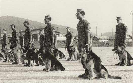 Image - vietnam-war-dogs.jpg