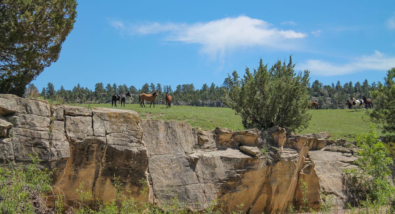 Image - horses6.JPG
