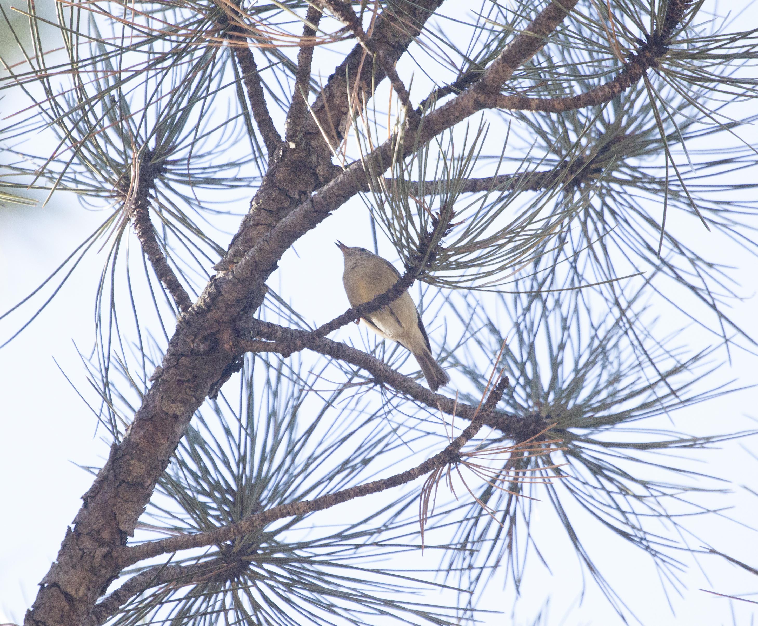 Image - bird6_.jpg