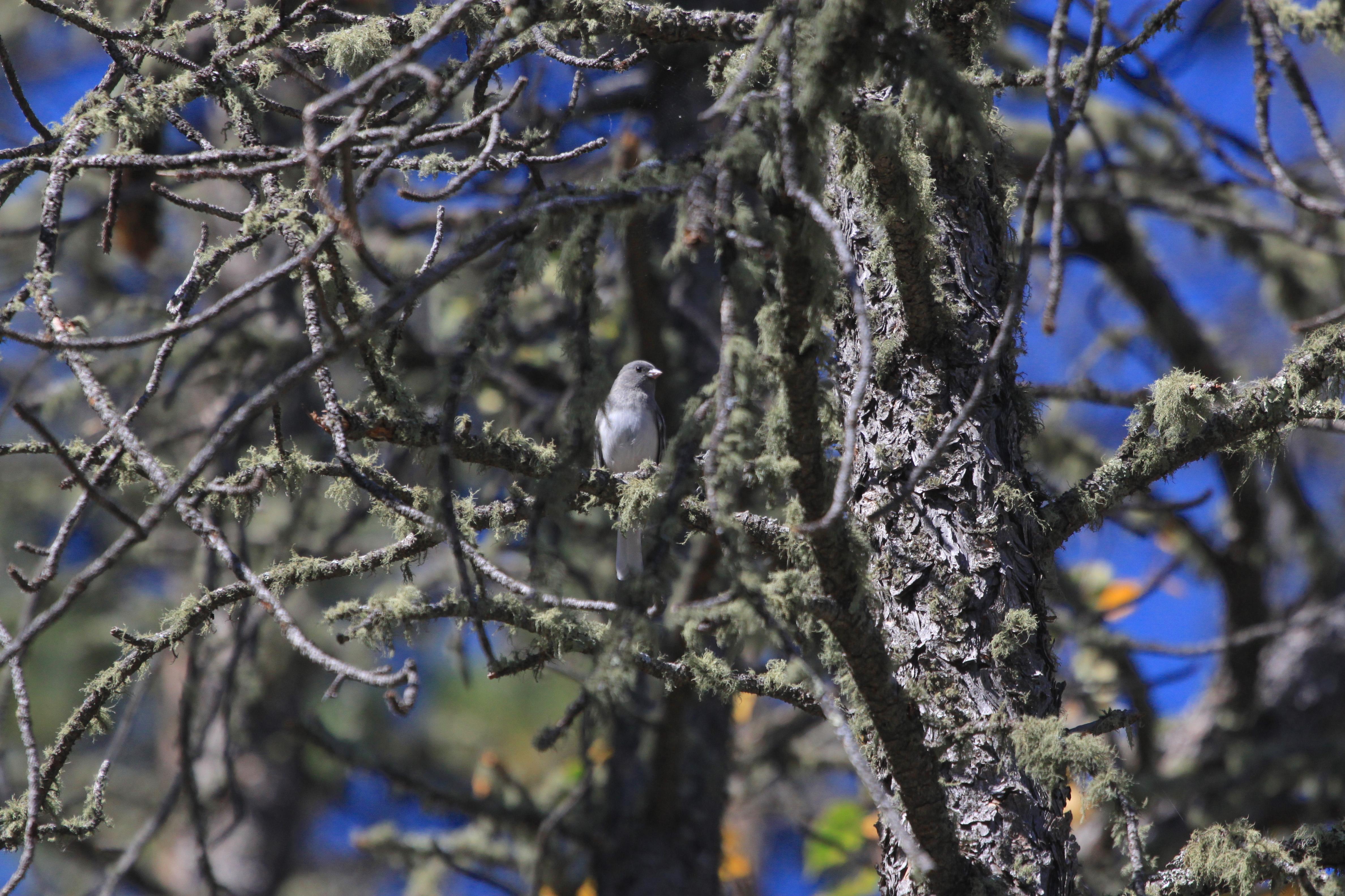 Image - birdintree2.JPG