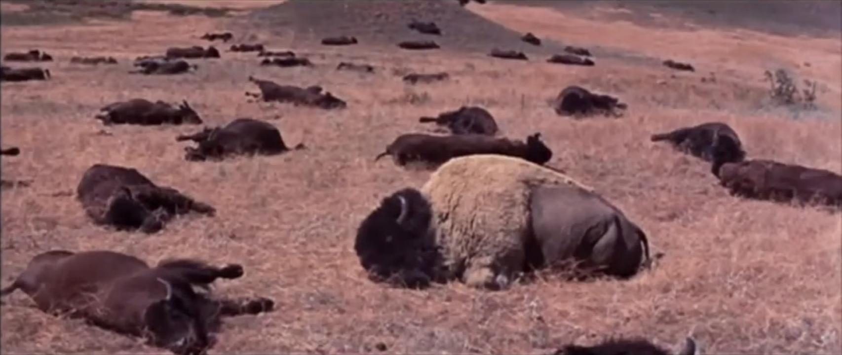 Image - buffalo.png