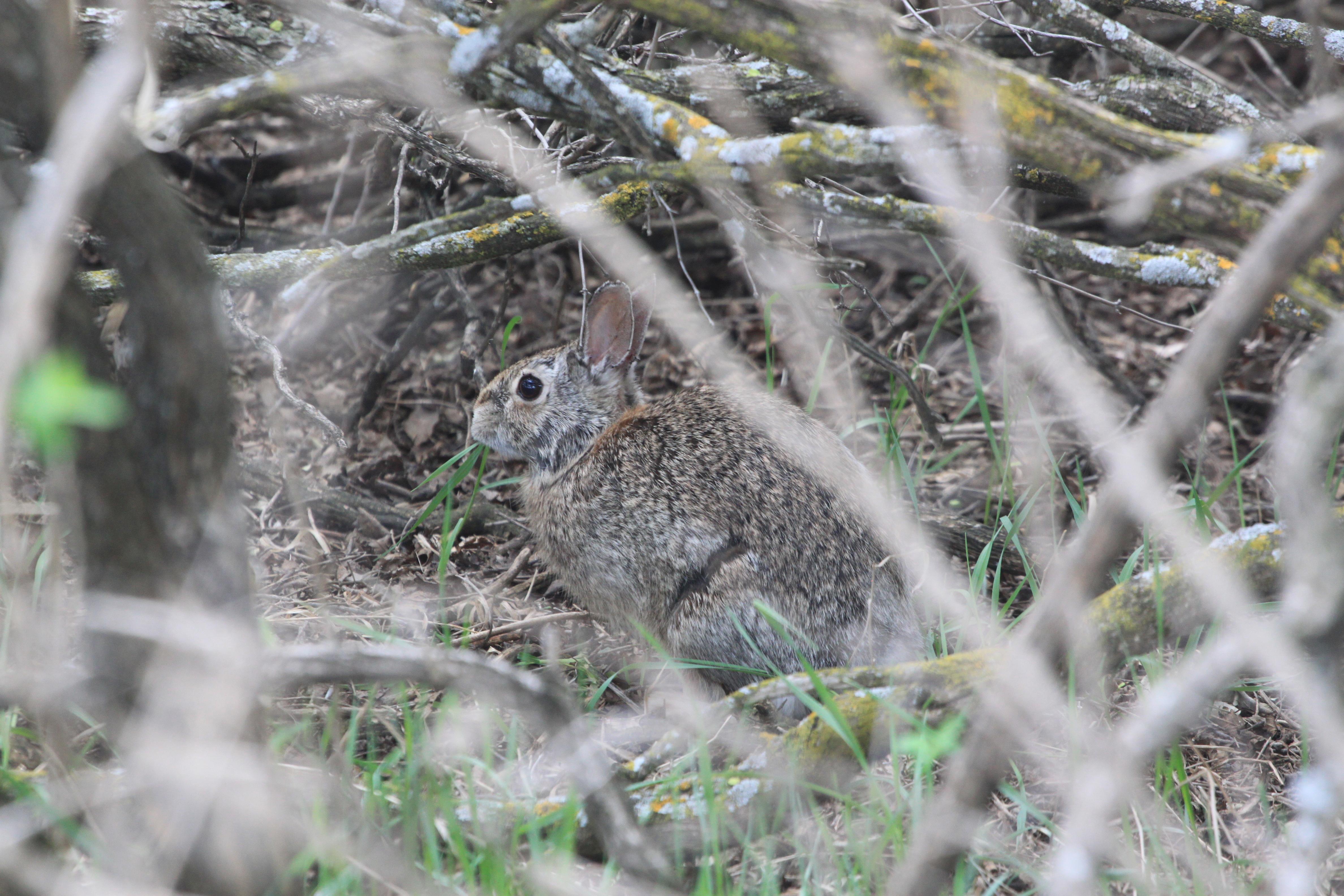 Image - bunny.JPG