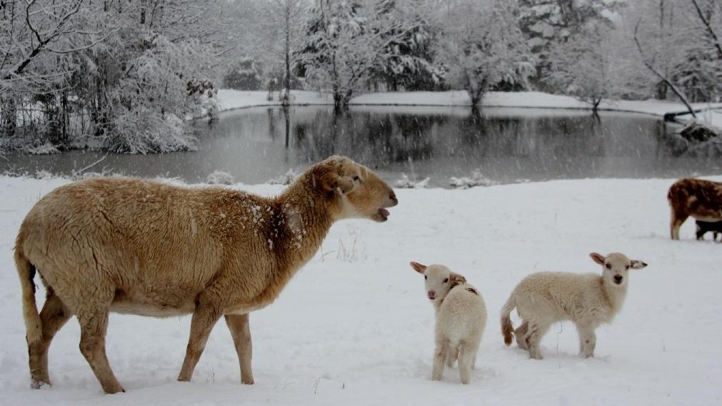 Image - SnowAnimals.jpg