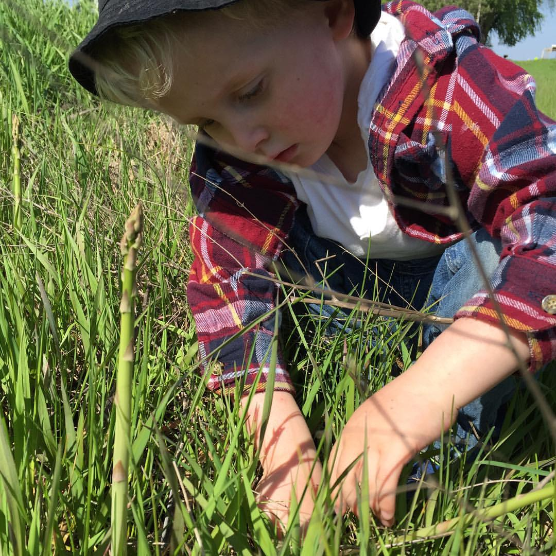 Image - Owen picking Asparagus.jpg