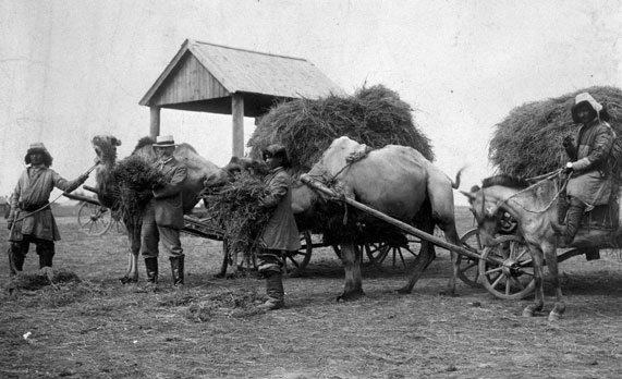 Image - back-pagec-996-camels-pulling-carriges-of-hay.jpg