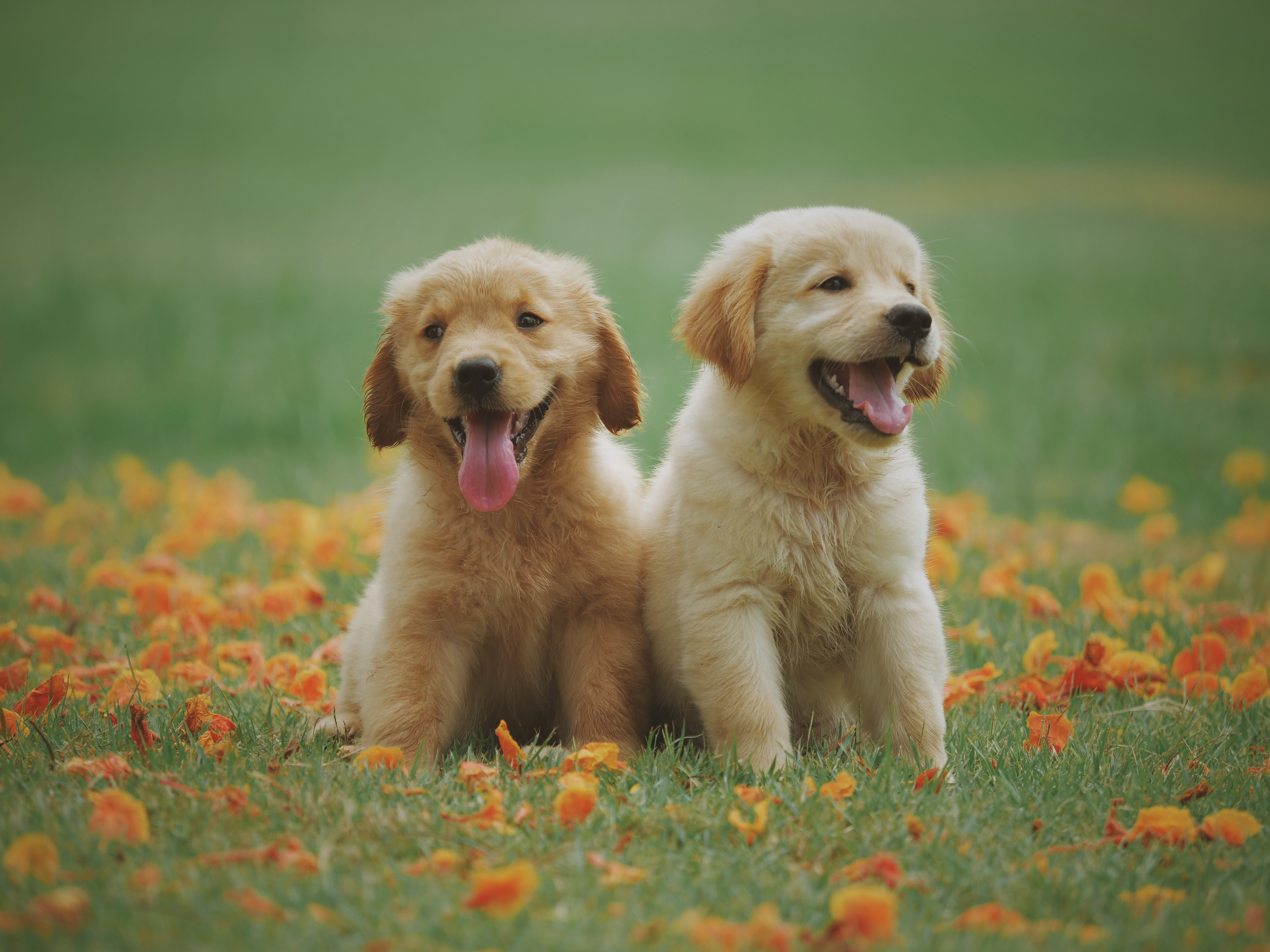 pbs.org - Welcome to PBS, the Puppy Broadcasting Service