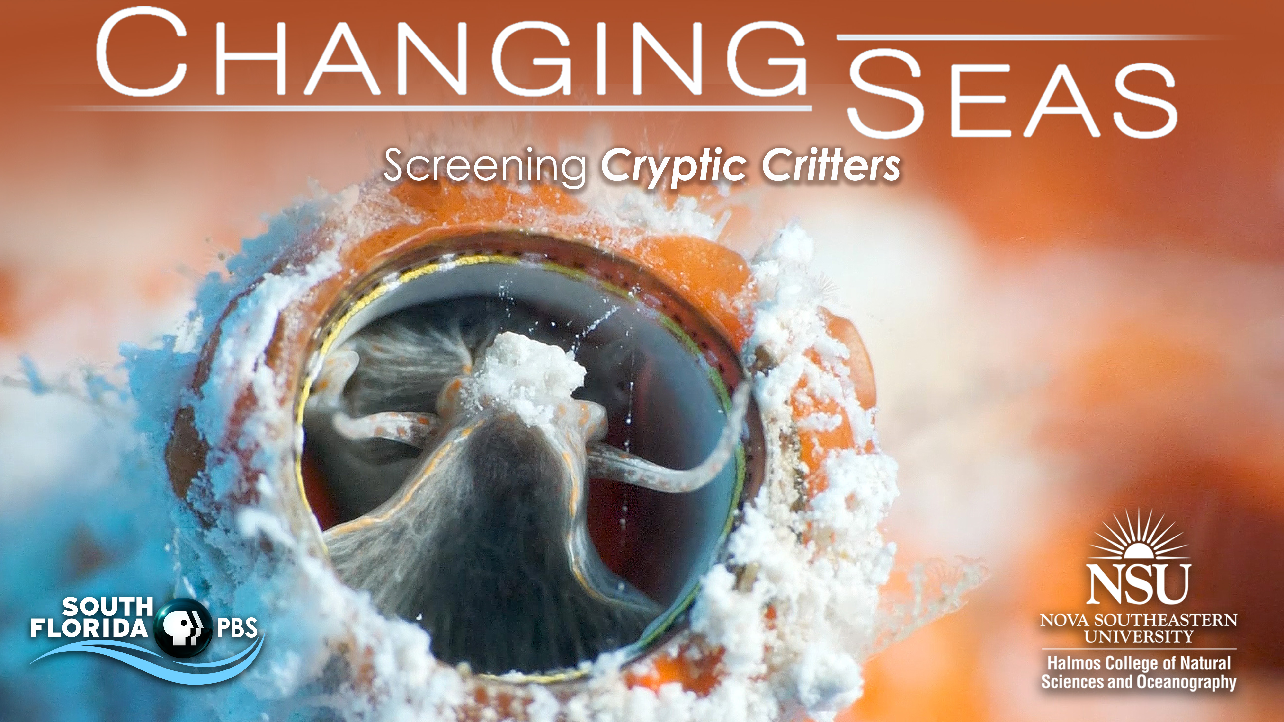 Screening: Cryptic Critters