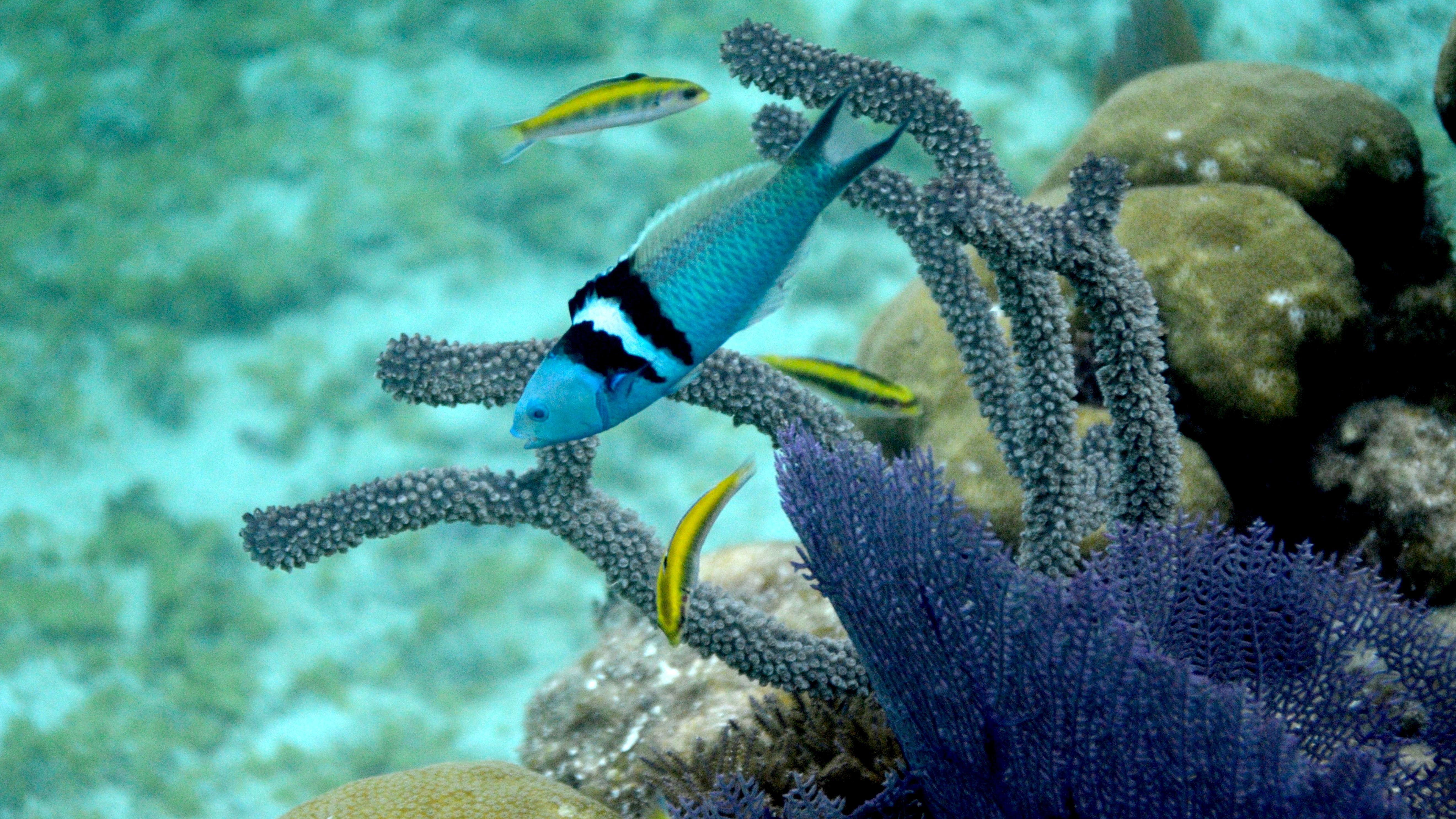 The Secret Sex Life of Fish