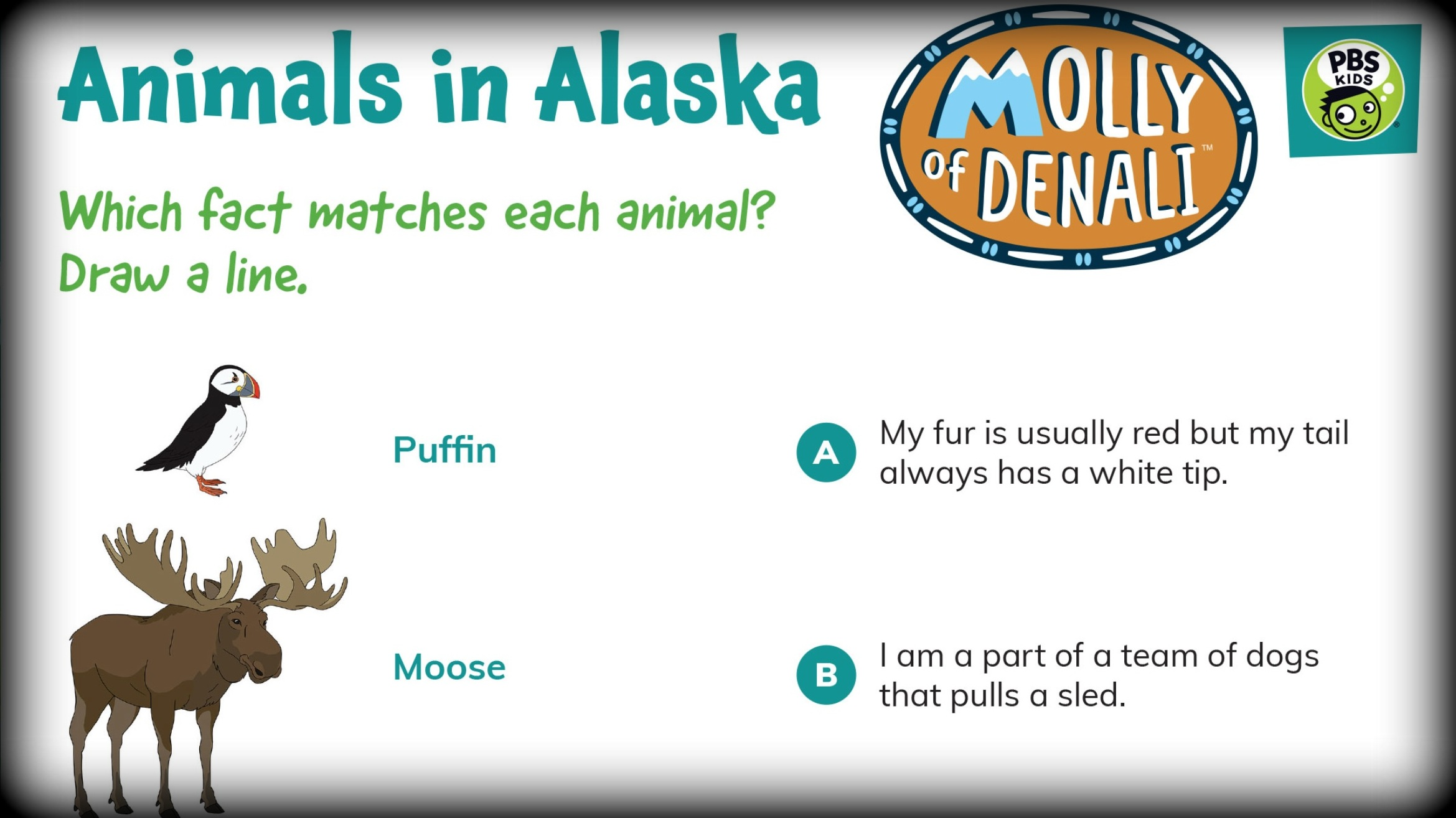 Molly of Denali Activities