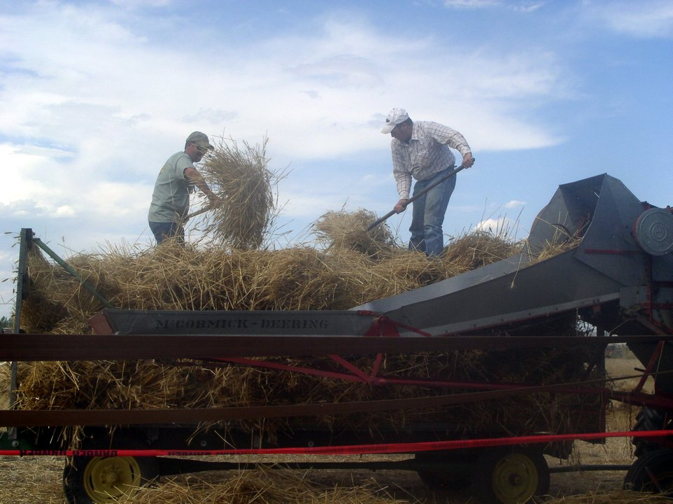 Forking sheaves into the thresher