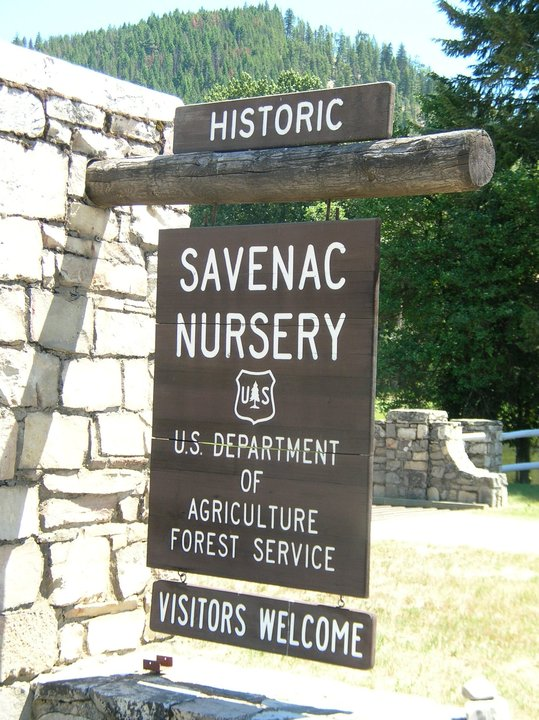 Savenac Nursery