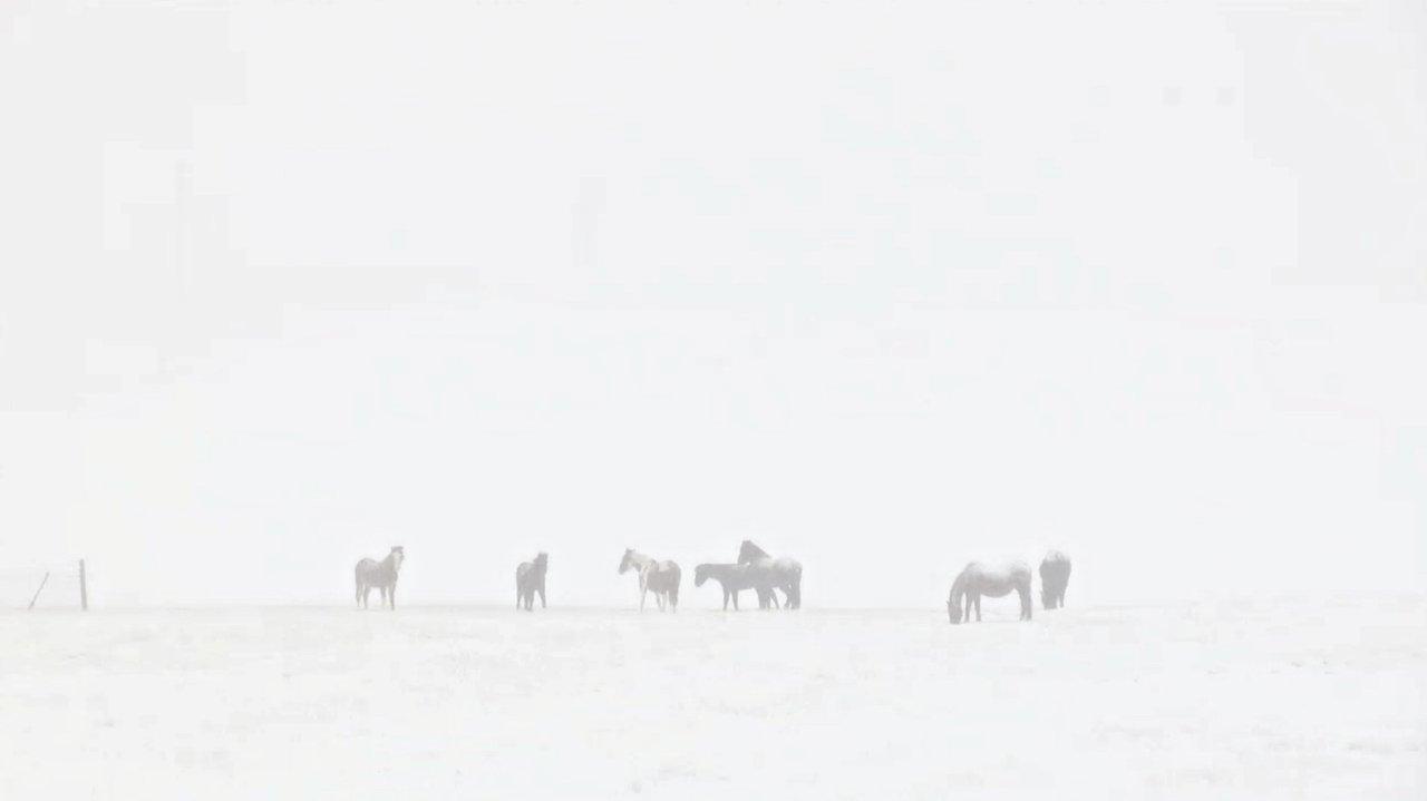 snow snowy pasture Browning Montana