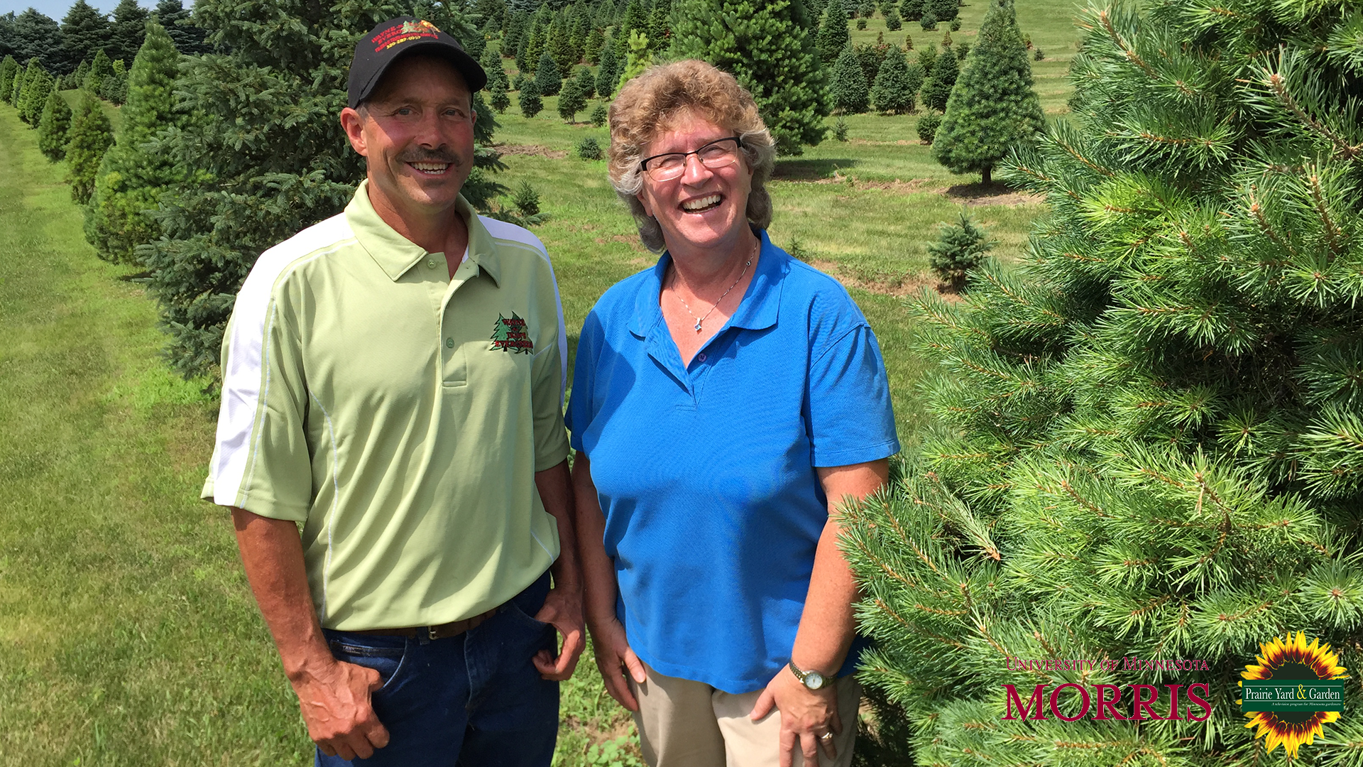 Christmas tree cultivation on Prairie Yard & Garden February 7