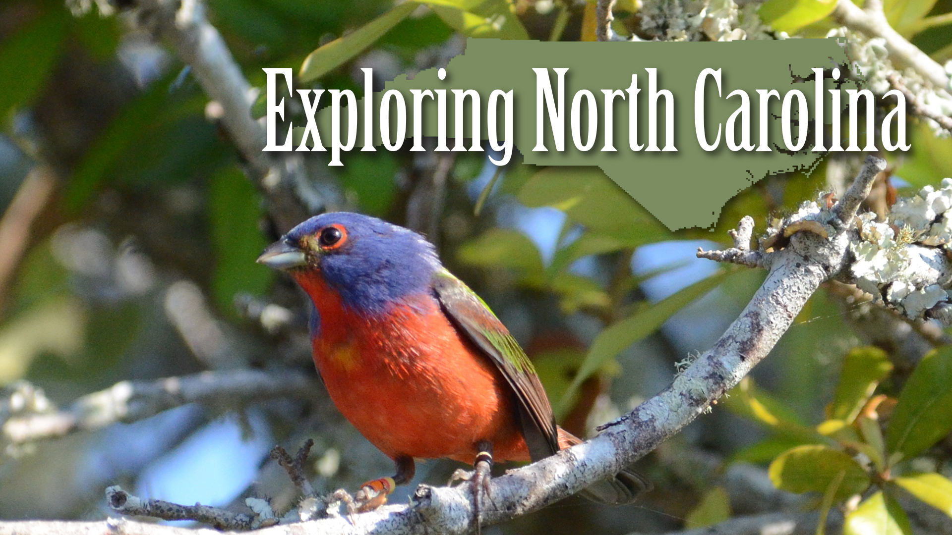 Learn More About Exploring North Carolina