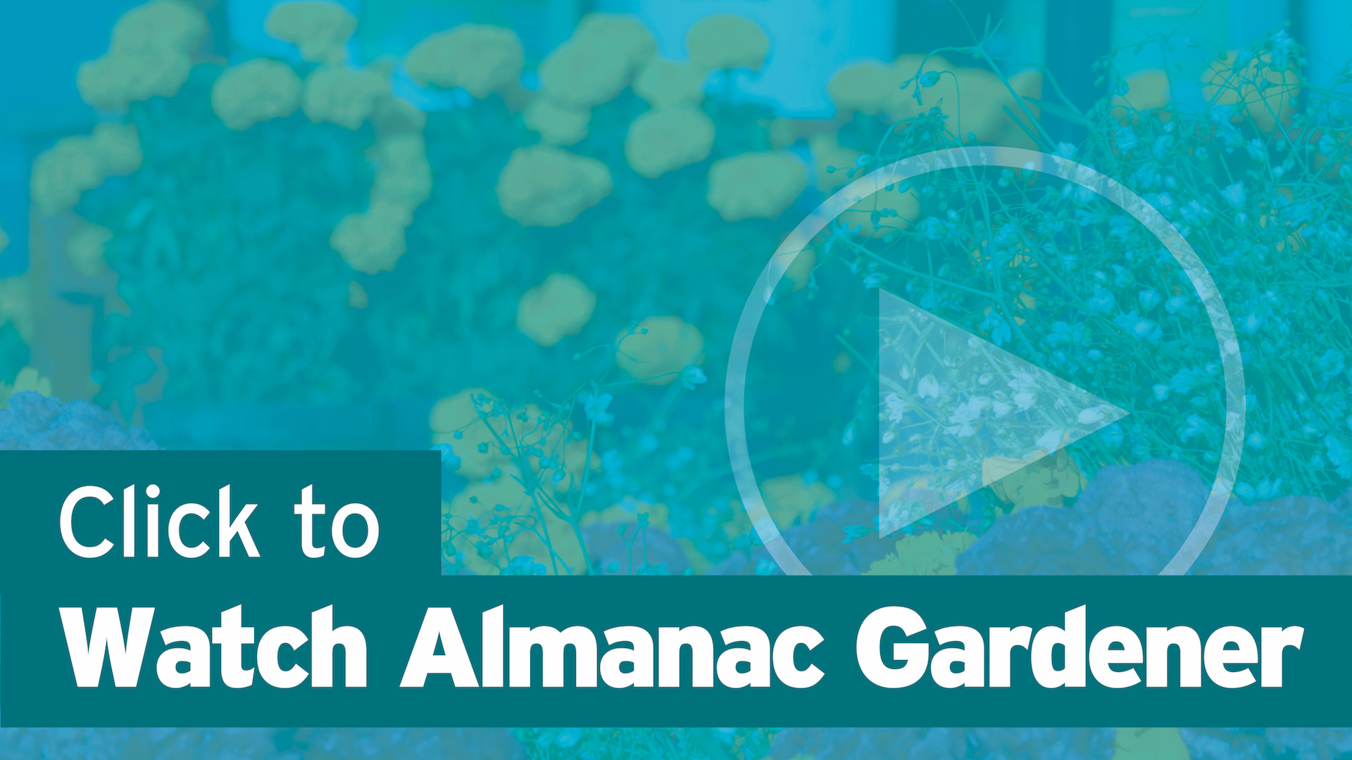Click Here to Watch Almanac Gardner