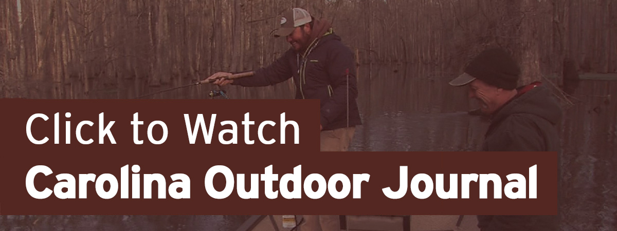 Click to Watch Carolina Outdoor Journal