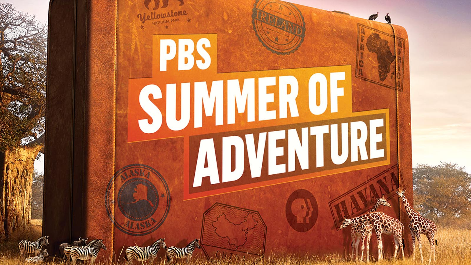 This Summer, WNED-TV brings you the world.