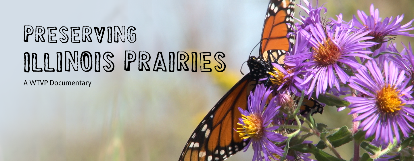 Preserving Illinois Prairies Header with Butterfly