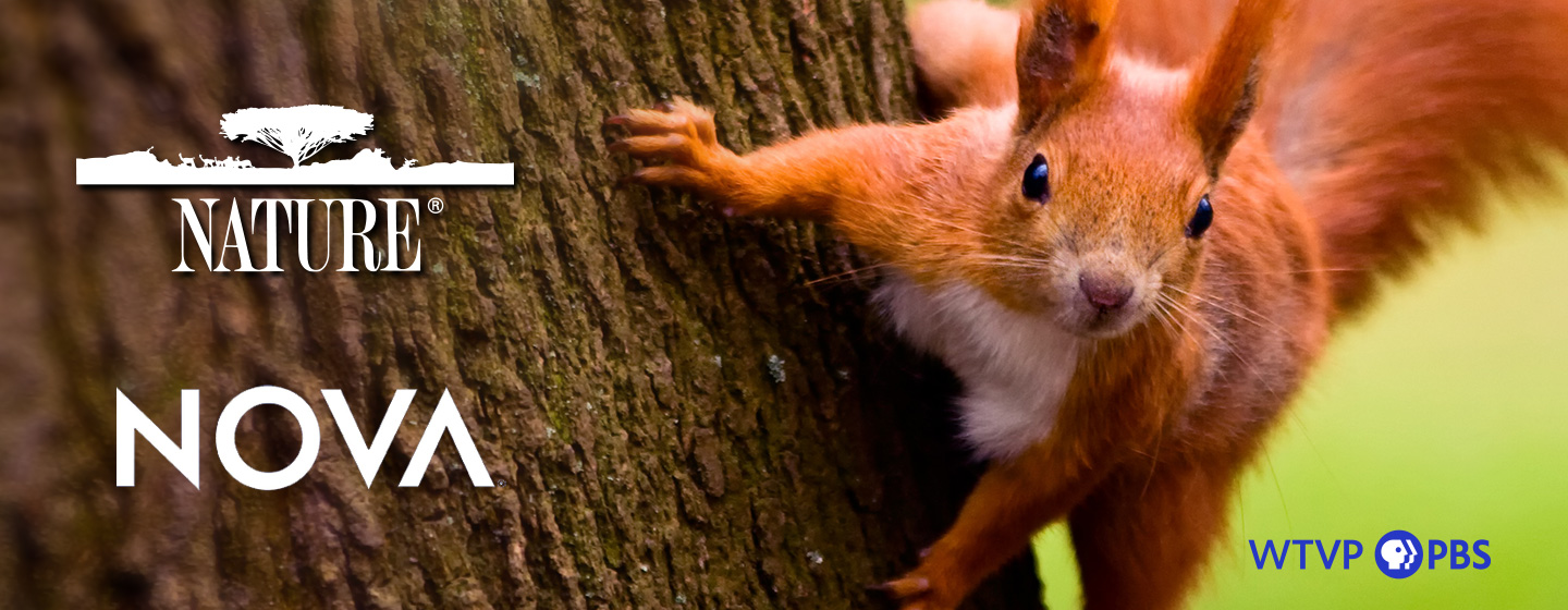 Red Squirrel on side of a tree - Nature & Nova Logos