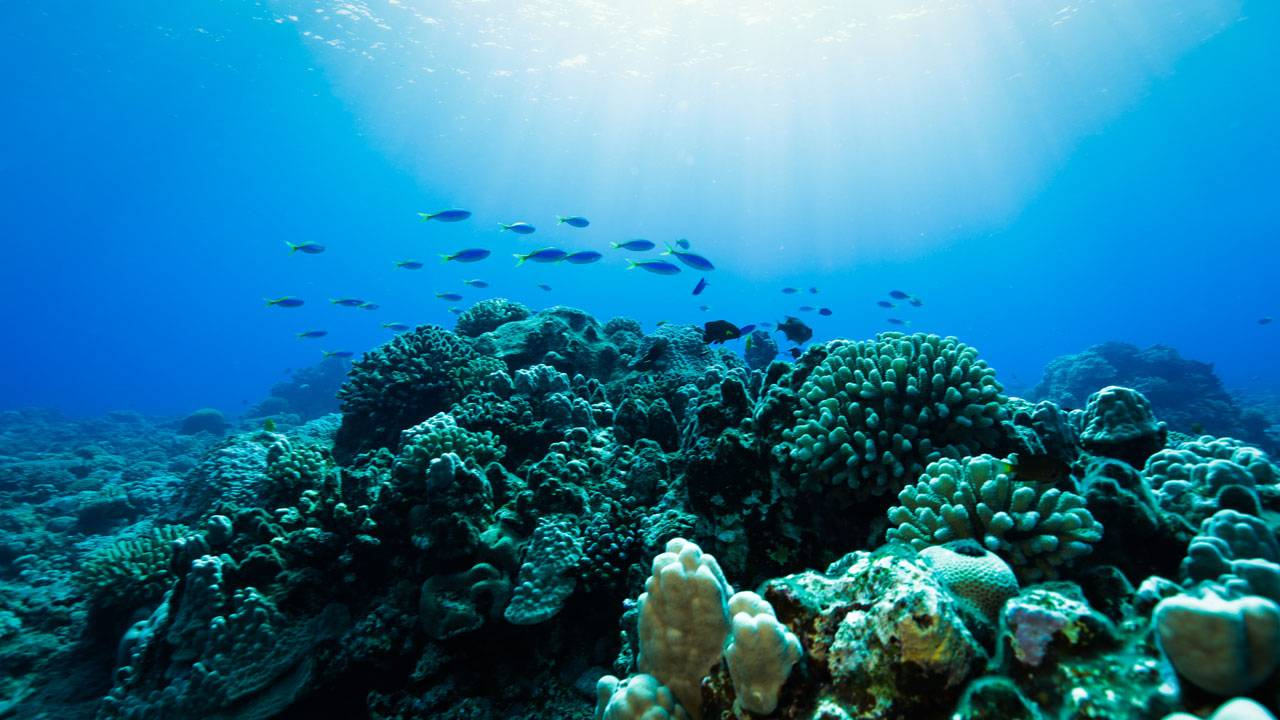 Changing Seas in Ocean Film Festival